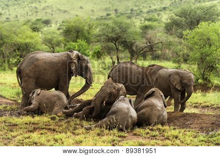 Herd of elephants resting, Serengeti, Tanzania, Africa
