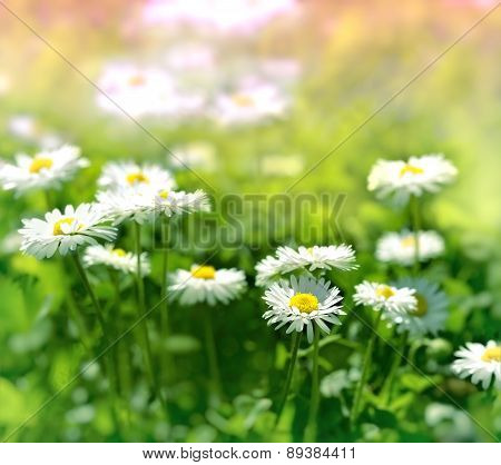 Meadow flowers in spring