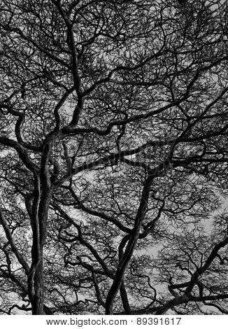 View of branches, Serengeti, Tanzania, Africa