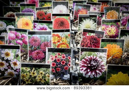 Berlin, Germany - April 10, 2015: Flower Stall At Botanischer Garten, Botany Garden. Every Year In S