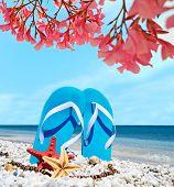 picture of oleander  - blue sandals and seastars under pink oleanders - JPG