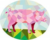 picture of oval  - Low polygon style illustration of a tamworth pig standing viewed from the side set inside oval - JPG