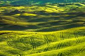 ������, ������: Tuscany Spring Rolling Hills On Sunset Volterra Rural Landscape Green Fields And Farmland Italy