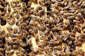 picture of bee-hive  - working bees in bee hive frames on a sunny day - JPG