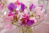 stock photo of sweet pea  - Bouquet of beautiful sweet peas flowers, a studio photo