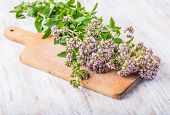 picture of oregano  - flowering oregano on a wooden kitchen board - JPG