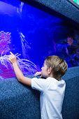 stock photo of algae  - Young man touching an algae tank at the aquarium - JPG