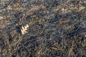 stock photo of prairie  - The charred remains following a prairie fire in Wisconsin - JPG