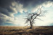 stock photo of lonely  - Lonely dead tree - JPG