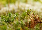 image of lichenes  - Micro landscape of forest floor with moss and lichen - JPG