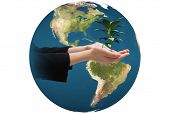 image of presenting  - Businesswomans hands presenting against little green seedling with leaves growing - JPG