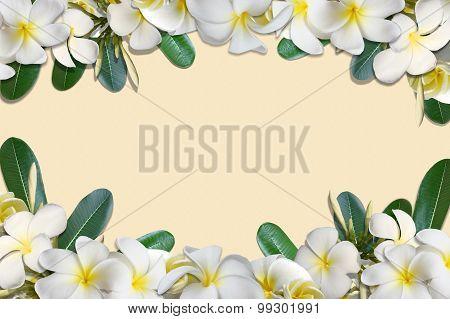 Frangipani flowers and leaf frame on old soft paper background
