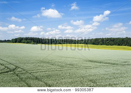 View over a large green grain field