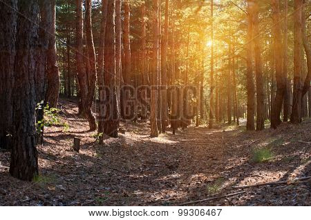 Beautiful scene in the forest with sun rays and shadows