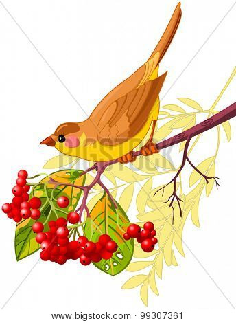 Cute bird sitting on mountain ash branch
