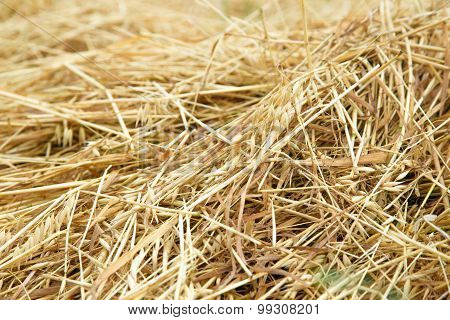 Hay Straw In The Field