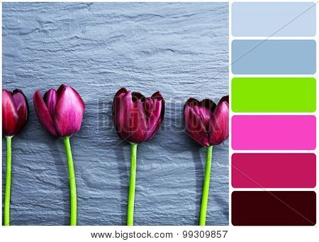 Beautiful violet tulips on gray background and palette of colors
