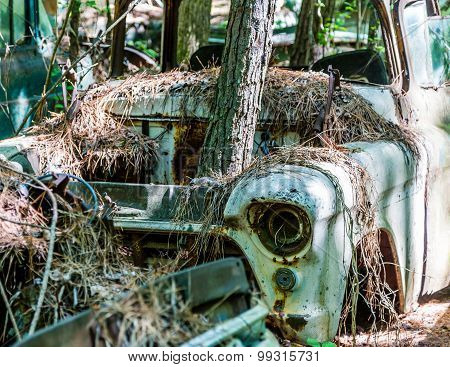 Tree Growing Through Engine Compartment