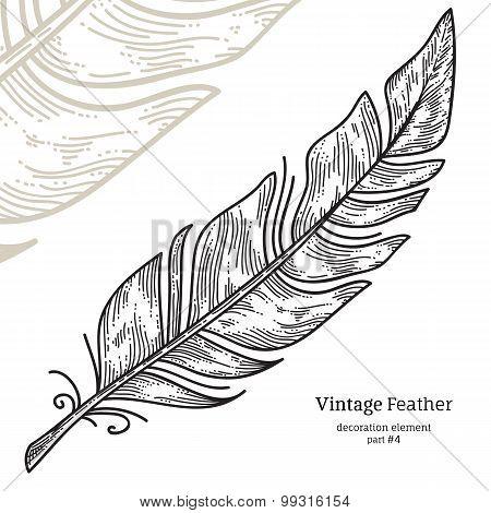 Feather Decorative Element