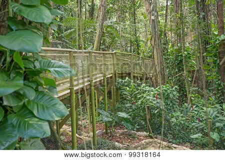 Walkway in the Park of Guadeloupe