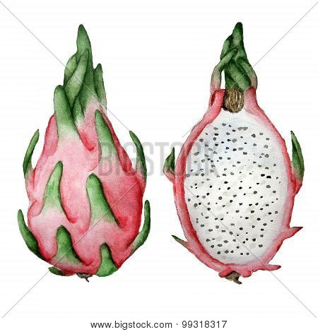 Watercolor Dragon Fruit