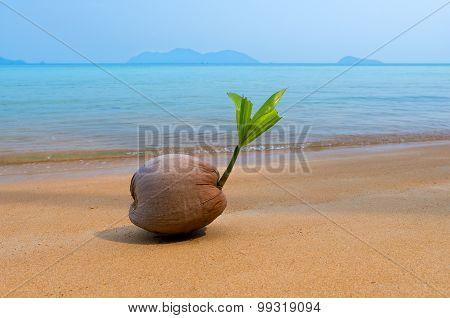 Coco Nut Sea