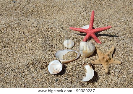 Seastars And Shells On Beach