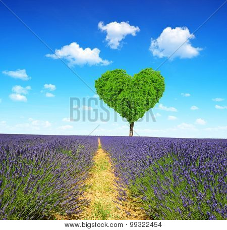 Lavender field with tree in the shape of heart