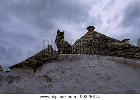 Cat Alberobello