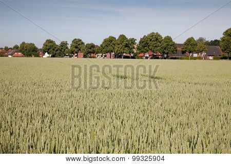 Germany, North Rhine-westphalia, Grain Field, Wheat Field