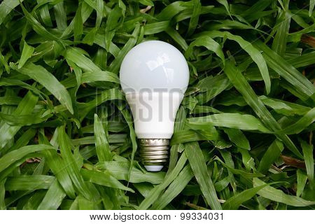 Led Bulb - Energy And Green Nature2