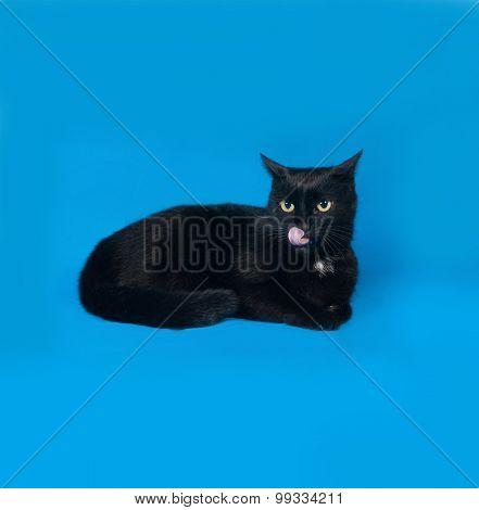Black Cat Lying On Blue