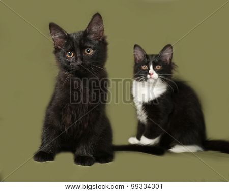 Two Kitten Sits On Green