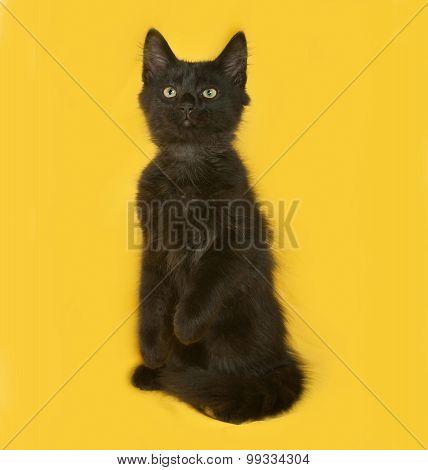 Black Fluffy Kitten Playing On Yellow