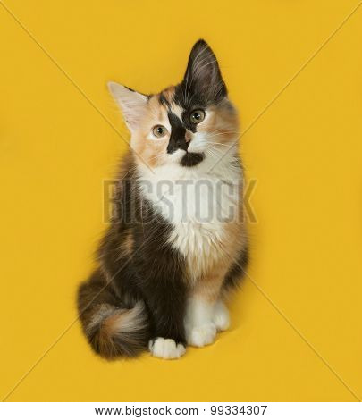Tricolor Kitten Sitting On Yellow