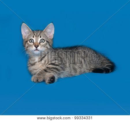Striped Kitten Lies On Blue