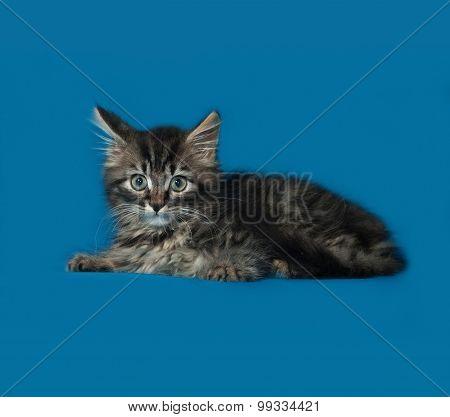 Little Tabby Kitten Sitting On Blue