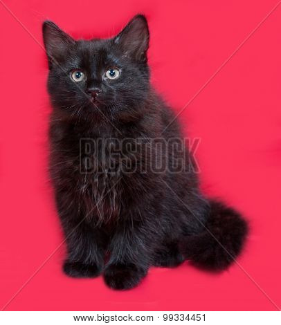 Small Fluffy Black Kitten Sitting On Red