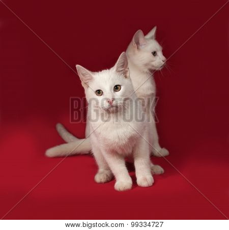 Two White Kitten Sitting On Red