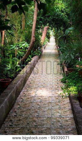 Empty Tropical Forest Path Made From Stone Tiles