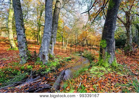 New Forest Stream In Autumn