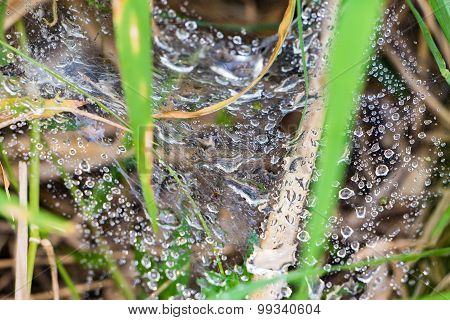 The water droplets on a spider's web