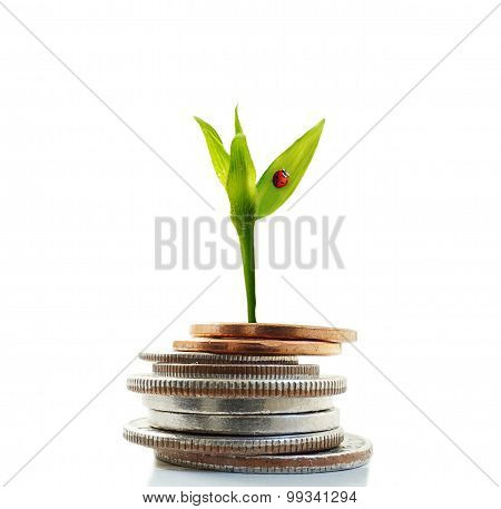 New Growth Money