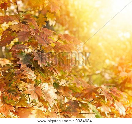 Oak tree - oak leaves