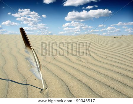seagull feather in the desert