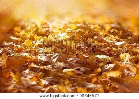 Autumn fallen leaves on ground