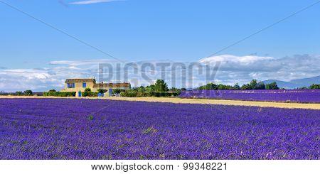 Provence Rural Landscape, France