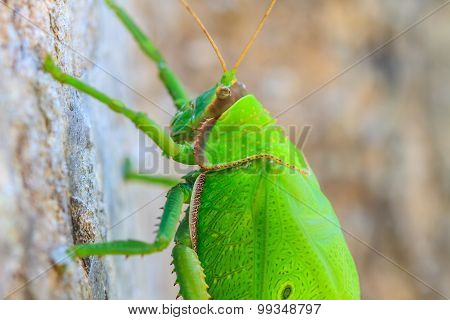 grasshopper macro on tree