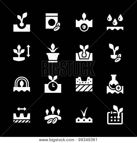 Set of Icons Of Seeds And Seedlings