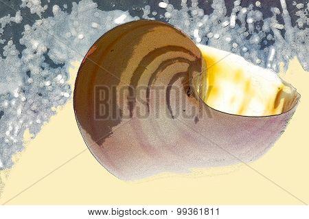 Ocean Snail
